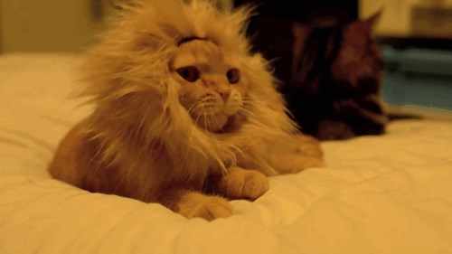RAWR! King of Beasts!