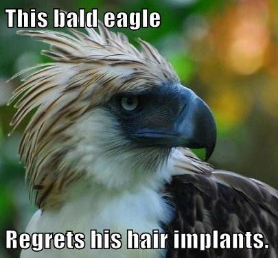 bald eagles hair