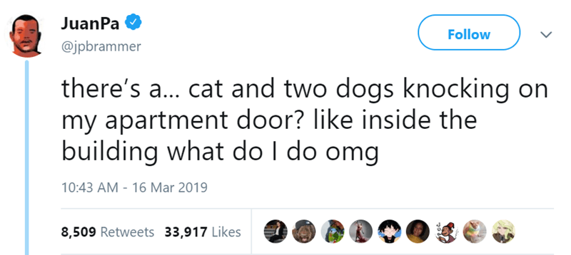 dogs mystery funny tweets Cats apartment - 7952901