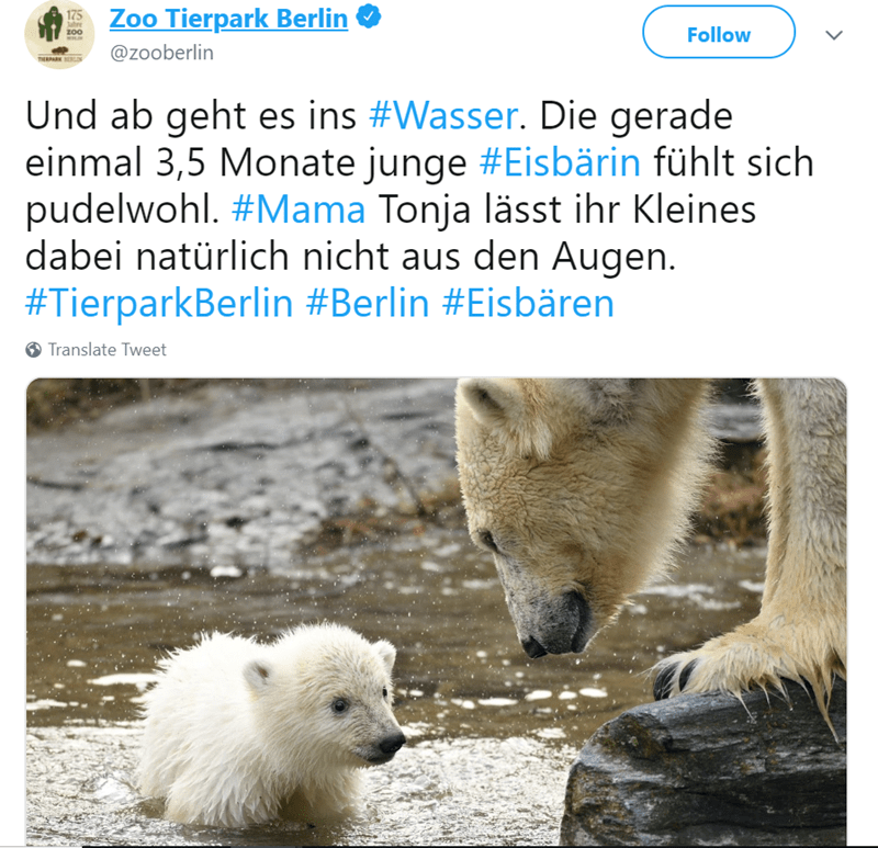aww polar bear cub zoo berlin cuteness overload - 7953157