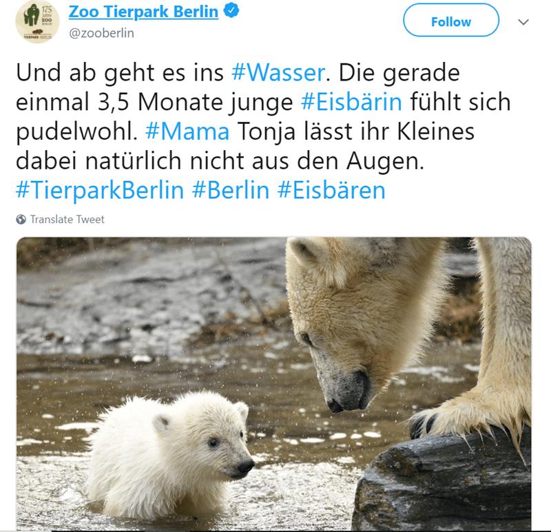 aww polar bear cub zoo berlin cuteness overload - 7953157