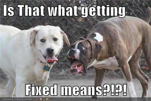 dogs,shock,fixed,funny