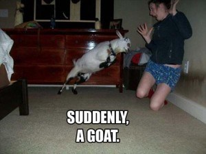goats photobomb perfectly timed