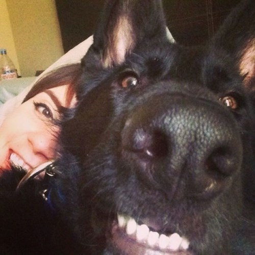 dogs,photobomb
