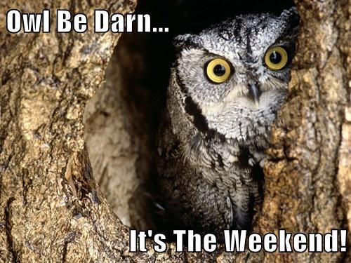 funny puns owls weekend - 7953675264