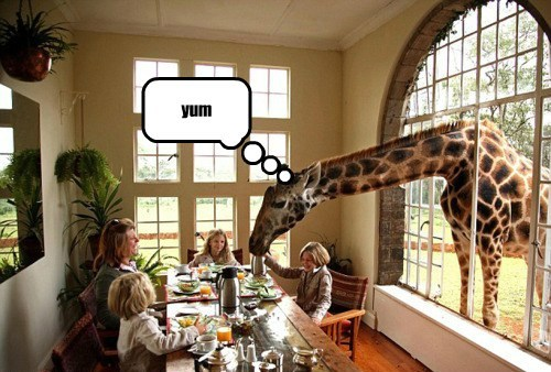 table dinner beg funny giraffes