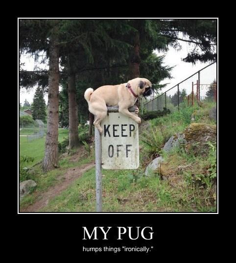 sign wtf pug funny