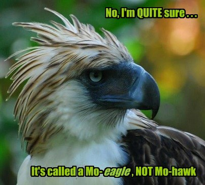 eagles hawks mohawk mo-eagle