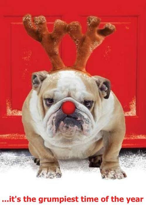 christmas reindeer bull dogs - 7954032384