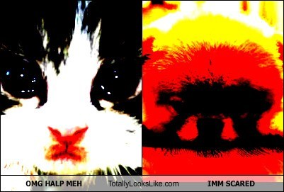 Cheezburger Image 7954070272