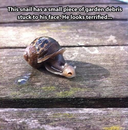 funny debris shell shocked snails - 7954124800
