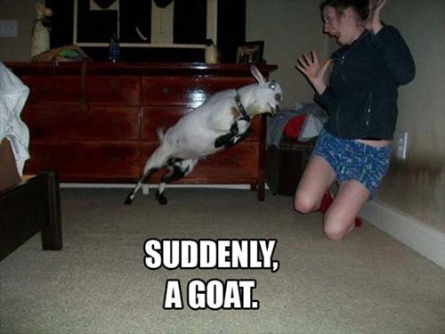 funny,suddenly,puns,goats,scared