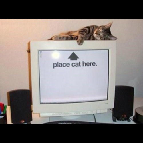 Cats computers funny