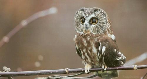 Pretty Little Owl