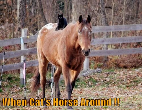 When Cat's Horse Around !!