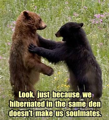 spring bears hibernate - 7955690240