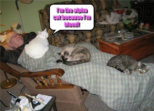 Cheezburger Image 7955806208