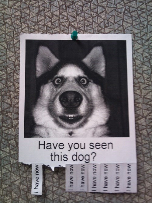 dogs lost dog have you seen this dog - 7955935744