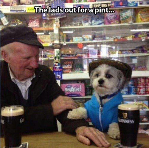 dogs guinness friends funny - 7957384960