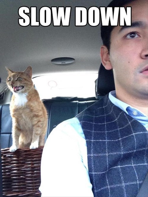 Cats,dogs,driving,funny,slow down,back seat driver