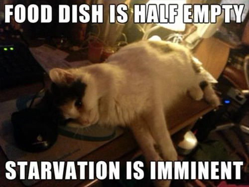 Cats,dramatic,starvation,imminent,manipulation