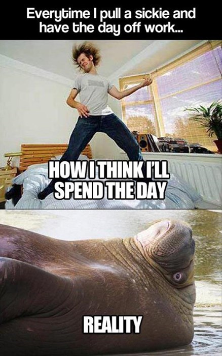 ditch,expectations,sick,walrus,reality