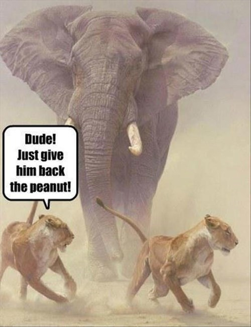 One Lion's Peanut is Another Elephant's...