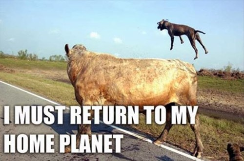 beam me up dogs cows Star Trek planet - 7957462016