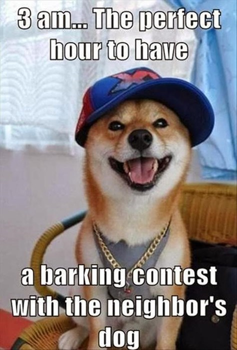annoying contest barking dogs funny late