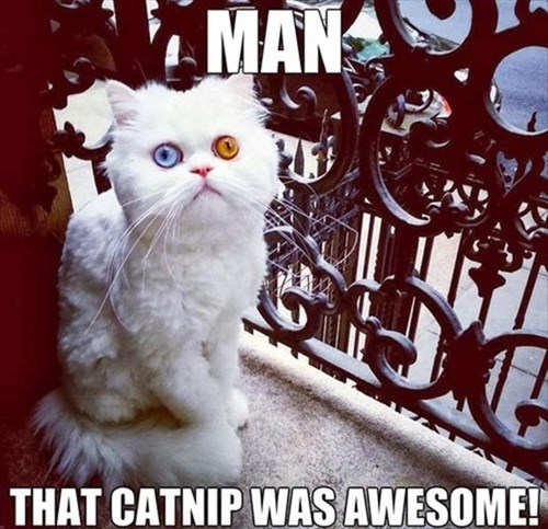 awesome Cats catnip color eyes pretty - 7957480192