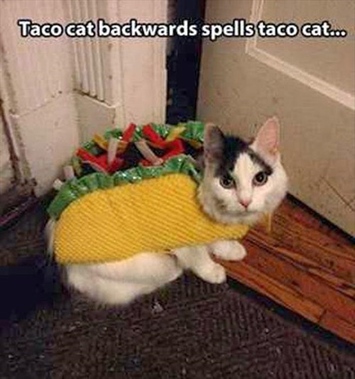 Cats,backwards,spelling,tacos,mind blow,taco cat