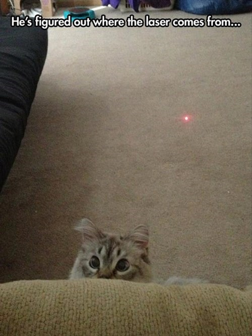 Cats,betrayal,laser,realize
