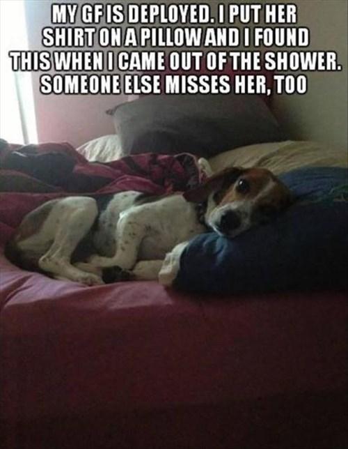cute dogs deployed Sad military veteran misses - 7957511680