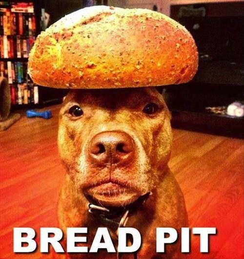 cute bread dogs brad pitt funny puns pit bulls - 7957522688