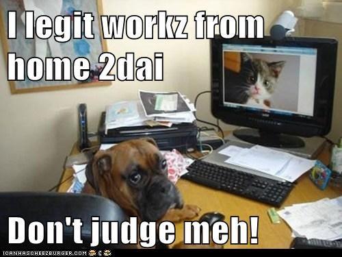 Cheezburger Image 7957790464