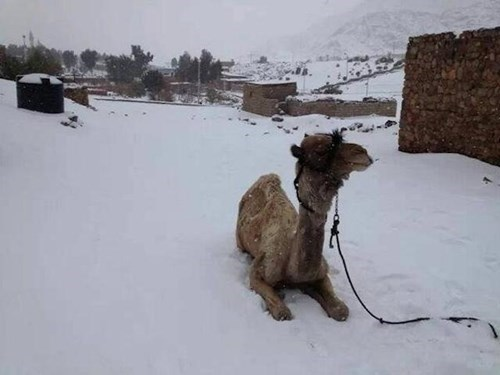 egypt,middle east,snow,storm,winter,crazy weather,Alexa