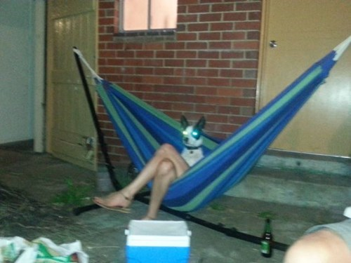 dogs,hammocks,photobomb