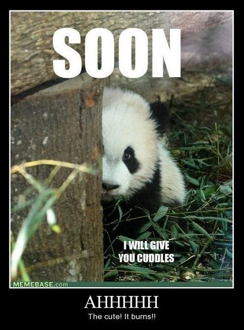 cute burning funny panda - 7958422528