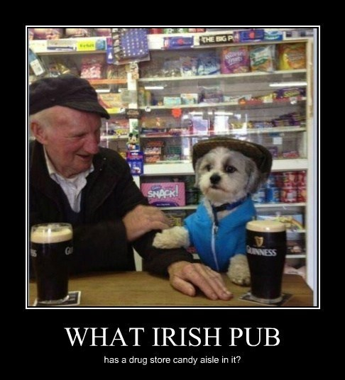 dogs guinness funny irish pub