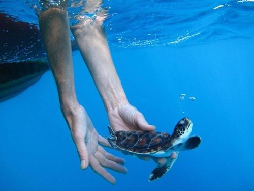 Babies turtles cute release squee - 7958581504