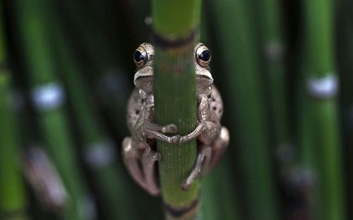 eyes cute hide squee frogs - 7958586624