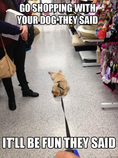 cute lazy puppies shopping pet store - 7958596352