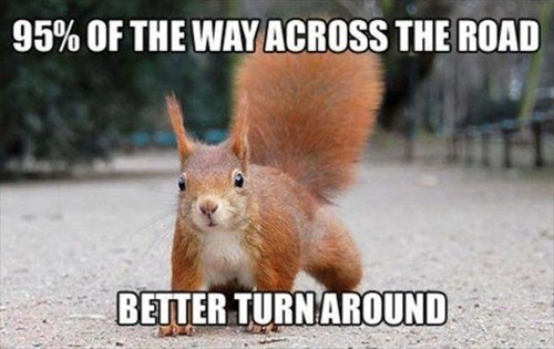 annoying crossing the street funny statistic squirrel
