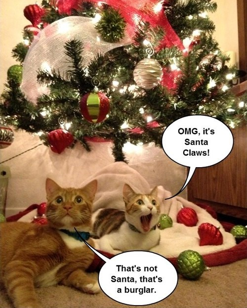 Cats,cute,christmas,santa,santa claws