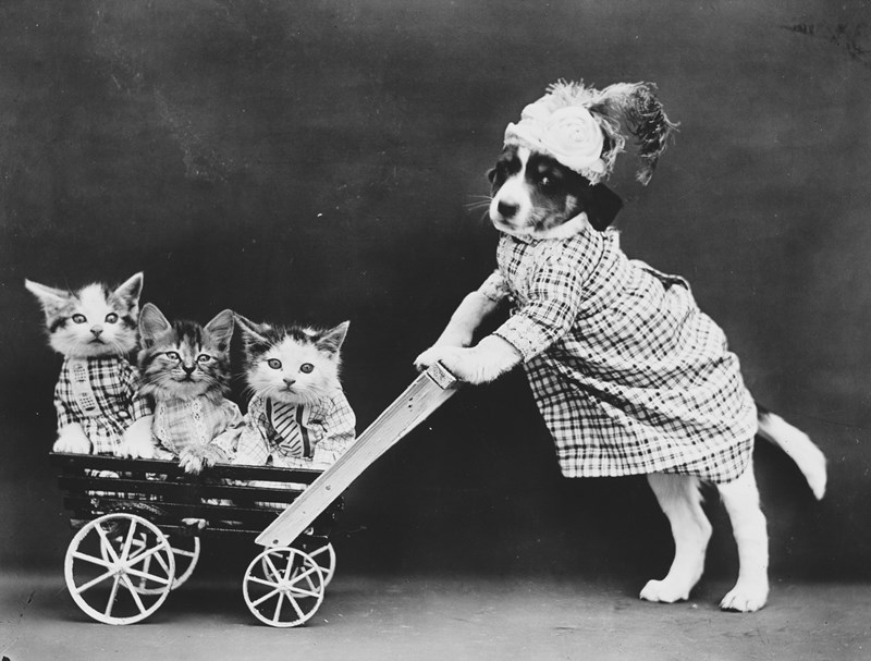 photography puppy kitten camera story Cats vintage - 795909