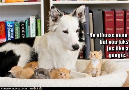 babysitter cute dogs kitten - 7959577344