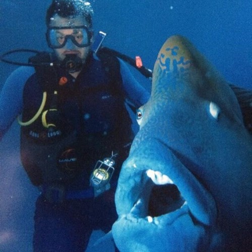 photobomb fish scuba diving