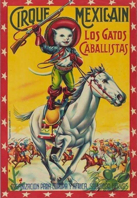 wtf mexico Cats - 7960248064