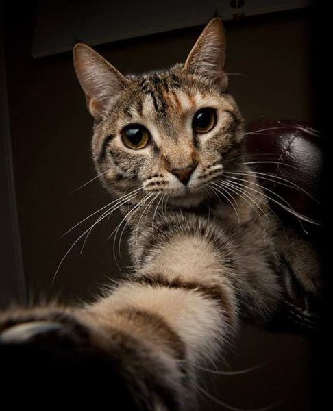 Cats,cute,funny,Photo,selfie