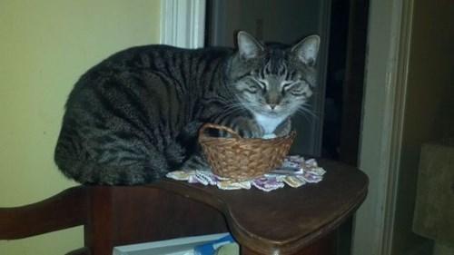 basket Cats funny I fits I sits - 7960600320